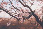 tumblr p5hwya9Im91vw48cvo1 1280